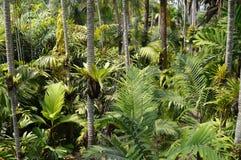 Árvore tropical Fotografia de Stock