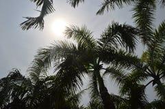 Árvore tropical Fotos de Stock Royalty Free
