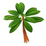 Árvore tropical com as folhas verdes isoladas no fundo branco Ilustração do close-up dos desenhos animados do vetor ilustração stock