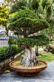 Árvore tropical do jardim Fotografia de Stock