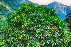 Árvore tropical verde Fotos de Stock Royalty Free