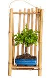 Árvore um bonsai na embalagem para levar fotos de stock
