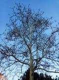 A árvore foto de stock