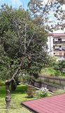 A árvore unilateral louca imagem de stock