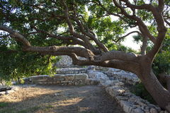 A árvore velha Fotos de Stock
