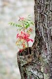 Árvore velha Fotografia de Stock Royalty Free
