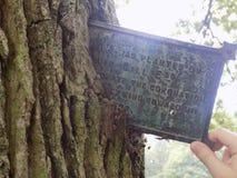 Árvore velha Fotografia de Stock