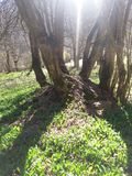 Árvore velha Foto de Stock