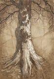 Árvore velha ilustração royalty free