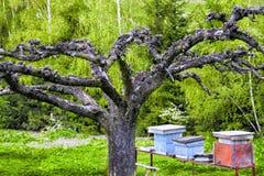 Árvore velha Fotos de Stock