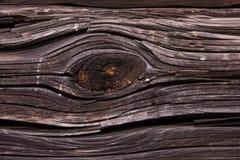 Árvore velha Imagens de Stock