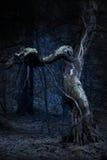 Árvore velha assustador Foto de Stock Royalty Free