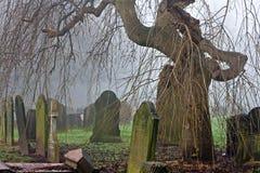 Árvore velha assustador do cemitério em um dia nevoento Imagem de Stock Royalty Free