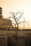 Árvore velha cujas as raizes sobreviveram ao castelo Ilustração Royalty Free