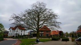 Árvore velha grande Imagens de Stock Royalty Free