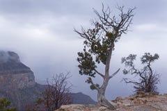 Árvore velha na borda de um penhasco imagem de stock