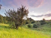 Árvore velha na ravina Fotografia de Stock Royalty Free