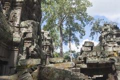 Árvore velha nas ruínas imagens de stock