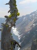 Árvore velha no banco de um lago da montanha fotografia de stock royalty free