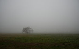 Árvore velha no campo um o dia nevoento imagens de stock