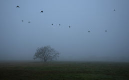 Árvore velha no campo um o dia nevoento imagens de stock royalty free