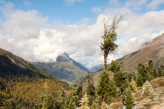 Árvore velha no outono Fotografia de Stock Royalty Free