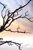 Árvore velha no parque Fotografia de Stock Royalty Free