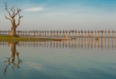 Árvore velha pela ponte do ubein Foto de Stock Royalty Free