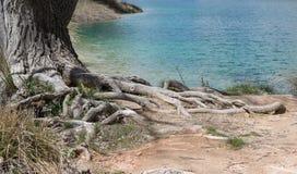 Árvore velha pelo lago imagens de stock