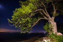 Árvore velha pelo lago Fotografia de Stock