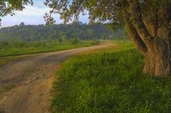 Árvore velha perto da estrada Imagens de Stock Royalty Free