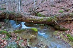 Árvore velha sobre o córrego da montanha Fotos de Stock Royalty Free