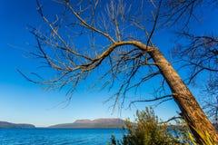 Árvore velha sobre o lago Tarawera imagens de stock royalty free