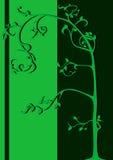 Árvore verde Imagens de Stock