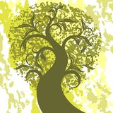 Árvore verde Imagens de Stock Royalty Free