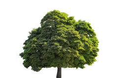 Árvore verde ilustração royalty free