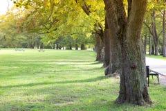 Árvore verde alinhada imagem de stock royalty free