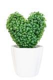 Árvore verde artificial do coração no potenciômetro Foto de Stock
