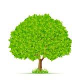 Árvore verde com grama e flores Fotos de Stock Royalty Free