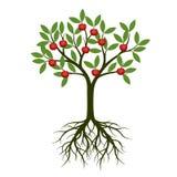 Árvore verde com raiz e maçã Ilustração do vetor Fotografia de Stock
