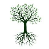 Árvore verde com raizes Ilustração do vetor Foto de Stock