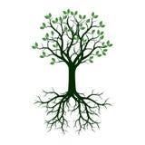 Árvore verde com raizes Ilustração do vetor Imagem de Stock