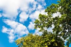 Árvore verde contra o céu azul com nuvens imagem de stock royalty free
