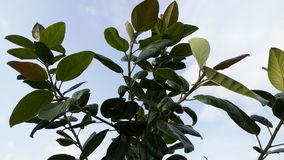 Árvore verde da folha imagem de stock royalty free