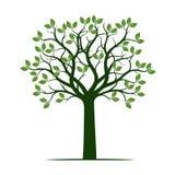 Árvore verde da mola com folhas Ilustração do vetor ilustração do vetor