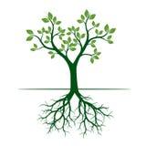 Árvore verde da mola Ilustração do vetor Foto de Stock