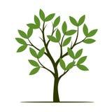 Árvore verde da mola Ilustração do vetor Imagens de Stock