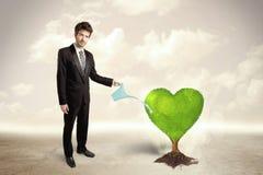 Árvore verde dada forma coração molhando do homem de negócio Foto de Stock Royalty Free