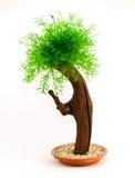 Árvore verde decorativa Imagens de Stock Royalty Free