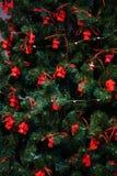 Árvore verde do ano novo decorada imagens de stock royalty free